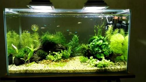 Прожекторы для аквариума