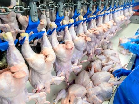экспорт куриной продукции